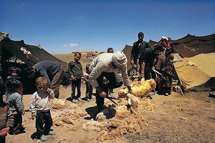 Kurdische Nomaden in Nordostpersien bei der Schafschur